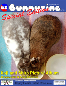 Bunnyzine Special Edition 1 - Koji and Shiro-1